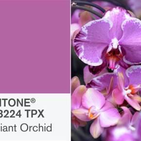 Interiors :: Pantone 2014 Color of theYear