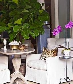 Interiors :: Fig TreeLove